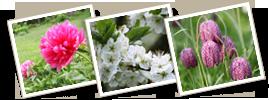 Blommande trädgård